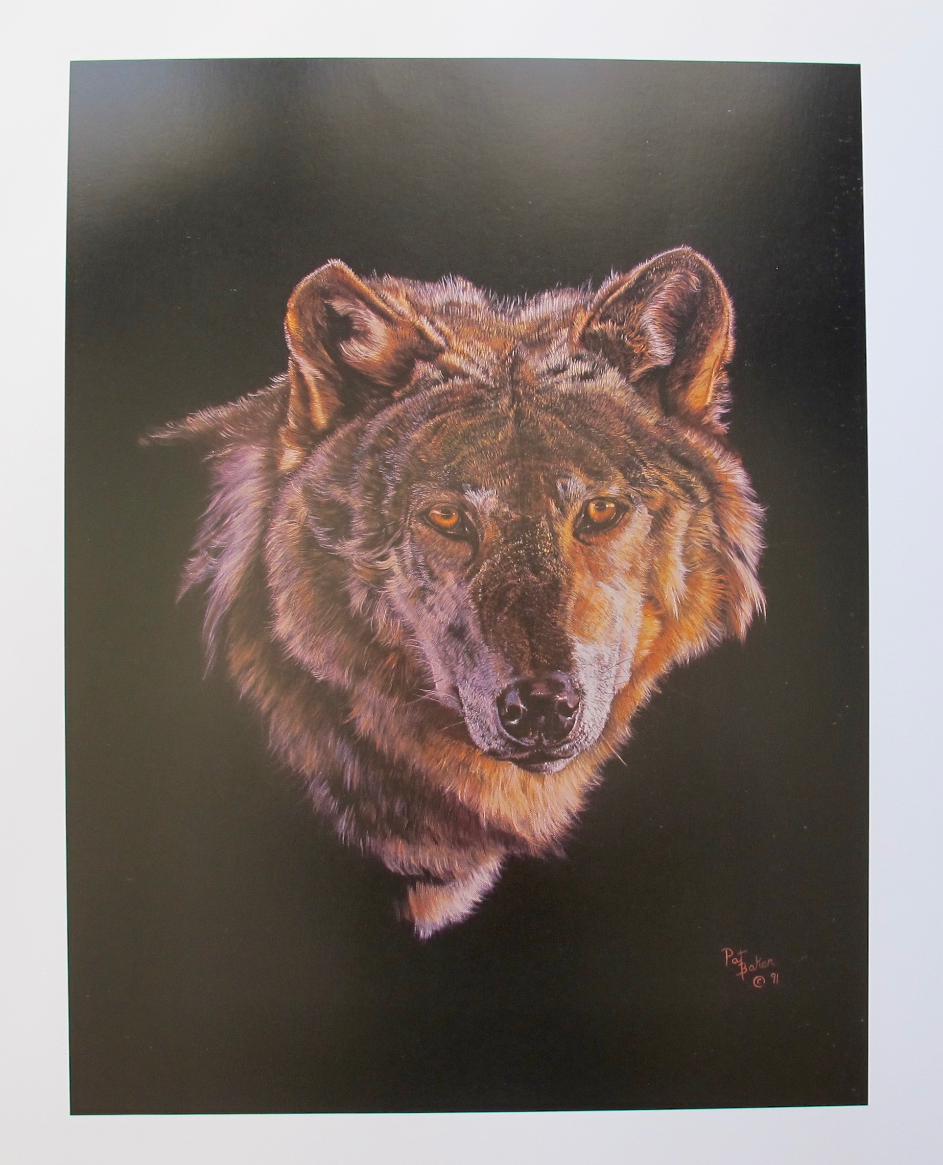 PAT BAKER Plate Signed Limited Edition Lithograph GREY WOLF