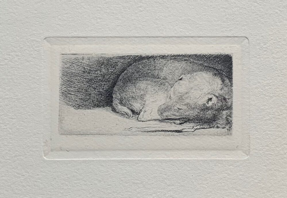 REMBRANDT Amand Durand Etching SLEEPING PUPPY